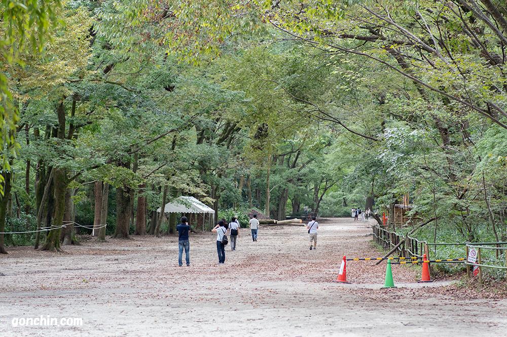 糺の森の全景1