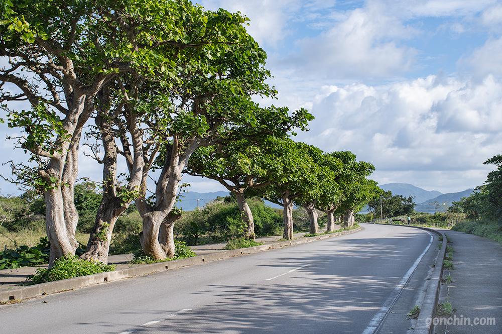 竹富島の道