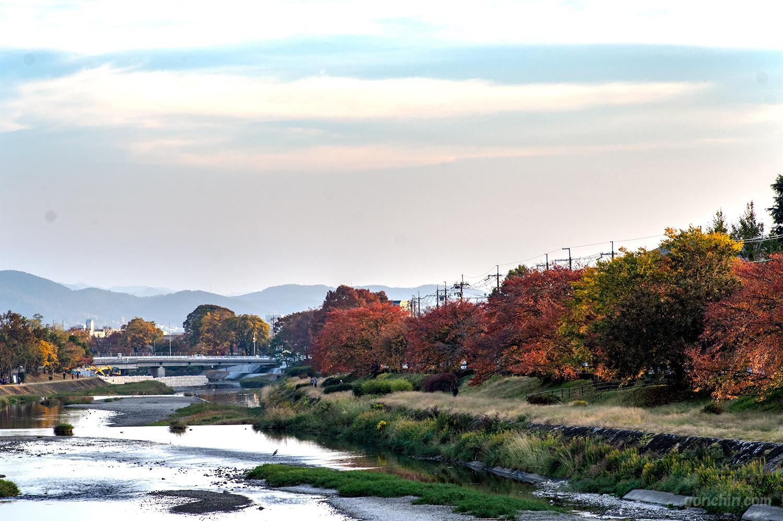 秋の鴨川の写真