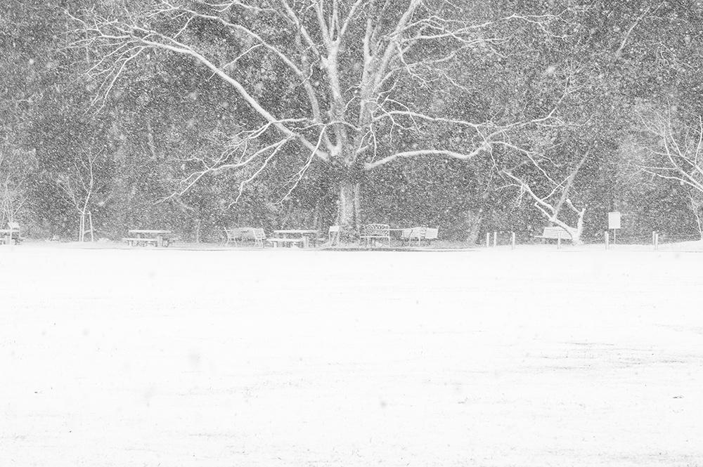 雪の日の京都植物園の写真